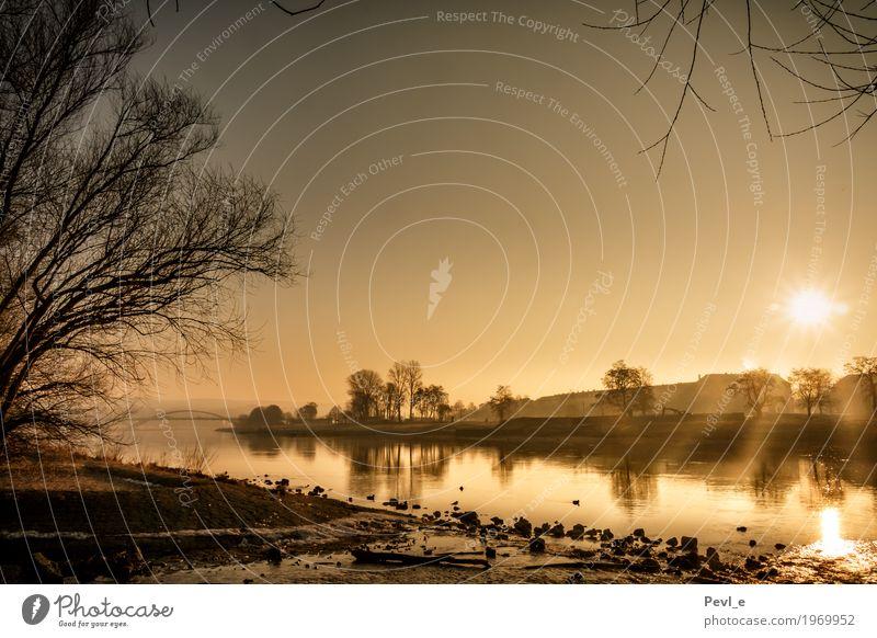 Goldener Morgen Natur Landschaft Wasser Sonne Sonnenaufgang Sonnenuntergang Sonnenlicht Frühling Schönes Wetter Nebel Flussufer Elbe Dresden Deutschland Europa