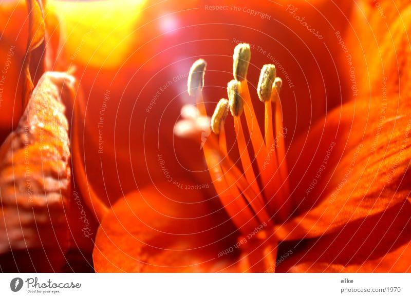 pflanzeneinblick Natur Blume Pflanze rot