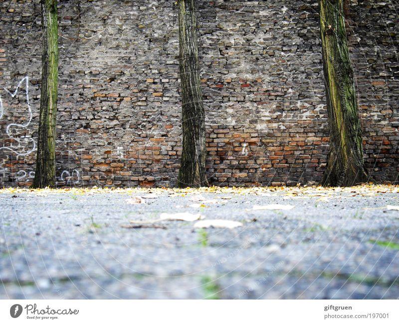 stillgestanden! Baum Pflanze Blatt Wand Stein Mauer Zufriedenheit Graffiti Kraft 3 Wachstum stehen liegen Backstein Baumstamm Kunst