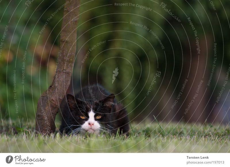 Schnupfen ? Tier Katze Perspektive Haustier Blick