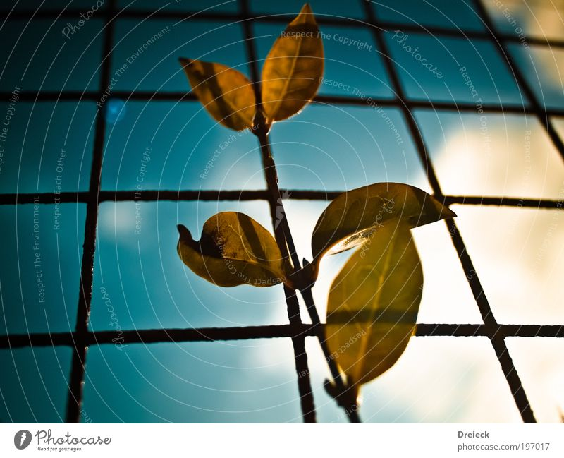Blatt Karo Umwelt Natur Pflanze Erde Luft Himmel Wolken Sonne Sonnenlicht Frühling Schönes Wetter Park Wiese Schottland Kleinstadt Zaun Metall Stahl Rost Netz
