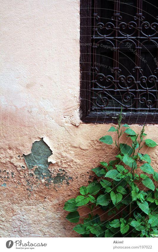 Zeiten ändern dich! Wohnung Haus Mauer Wand Fassade Fenster Verfall Vergänglichkeit Farbfoto Außenaufnahme Textfreiraum links Textfreiraum oben Tag