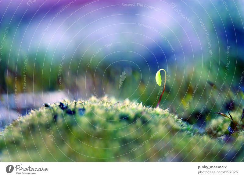 Allein Umwelt Natur Landschaft Pflanze Erde Frühling Sommer Wetter Schönes Wetter Moos Grünpflanze Wildpflanze Park Wiese glänzend klein lang Sauberkeit weich