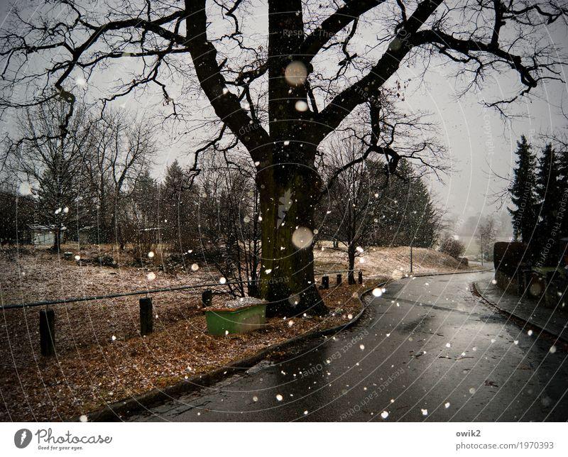 Winterglück Wolken Wetter Schönes Wetter Schnee Schneefall Pflanze Dorf Straße kalt Vergänglichkeit Dorfstraße Dorfidylle trist ruhig friedlich Schneeflocke