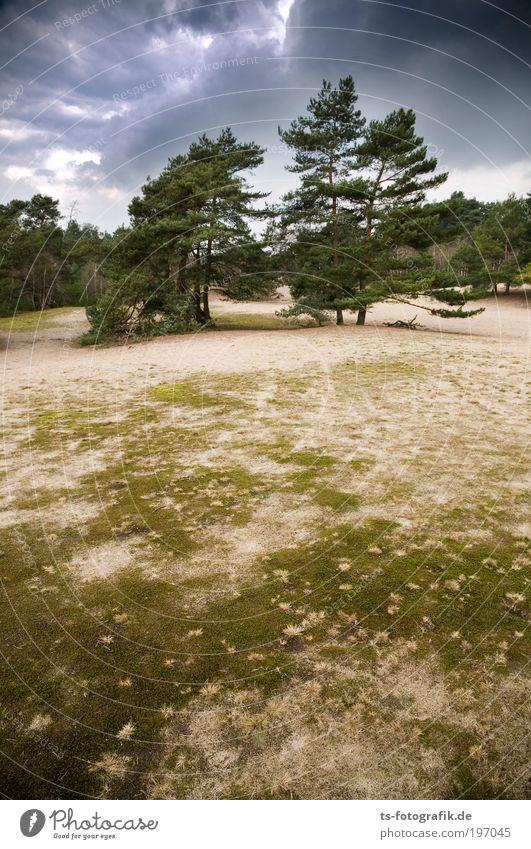 Wildwuchs II Natur Himmel Baum Pflanze Ferien & Urlaub & Reisen ruhig Wolken Leben Erholung Gras Sand Kraft Wind Wetter Umwelt Ausflug