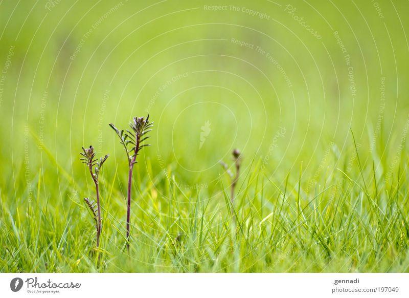 Vater, Mutter, Kind Natur Blume grün Pflanze Blatt Erholung Wiese Gras Frühling Umwelt Wachstum Rasen entdecken Grünpflanze rasenmähen