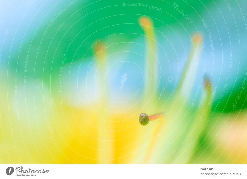 abgestempelt Natur Pflanze Blume Erholung gelb Leben Blüte Frühling außergewöhnlich hell Park Design frisch Sträucher Fröhlichkeit fantastisch