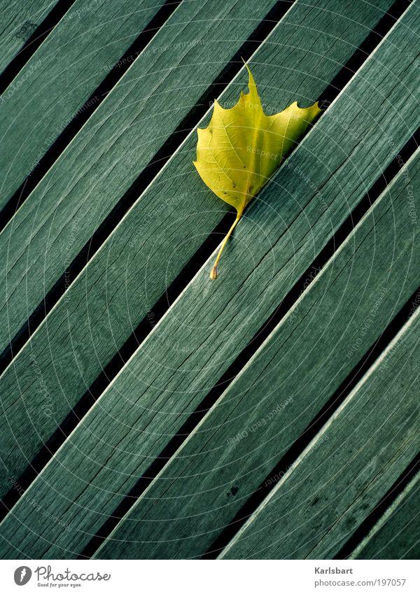 fall. Natur schön Sommer Blatt ruhig Erholung Umwelt Leben Herbst Bewegung Garten Linie Fassade Design Lifestyle Wandel & Veränderung