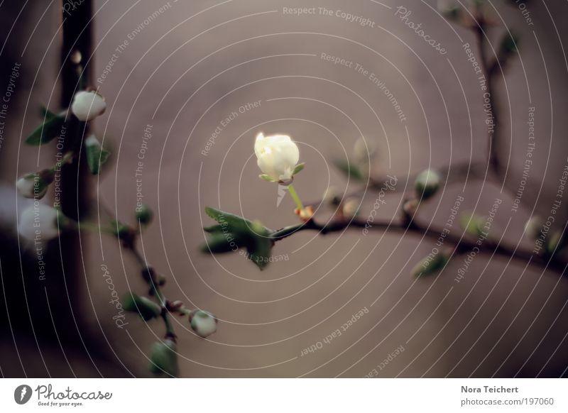 Blütenzauber Natur weiß schön Baum Pflanze Sommer Blume Tier Blatt ruhig Umwelt Landschaft Leben Gefühle Frühling