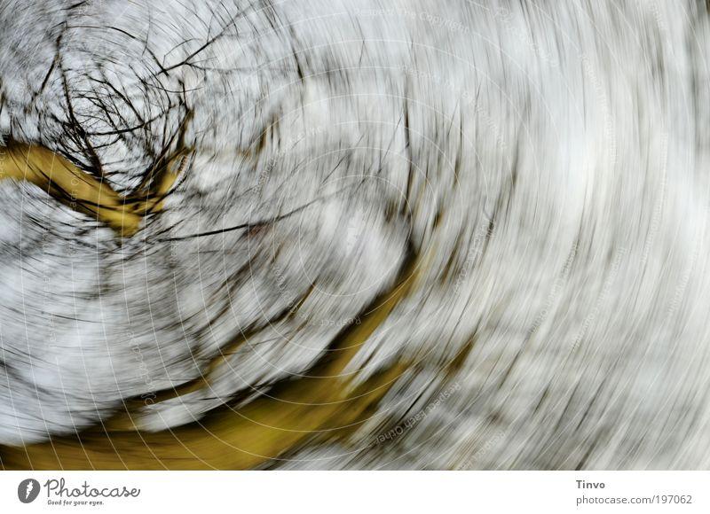 Reigen Himmel Natur Baum träumen Park Tanzen Geschwindigkeit drehen abstrakt kreisen Drehung Zweige u. Äste schwindelig Traumtänzer