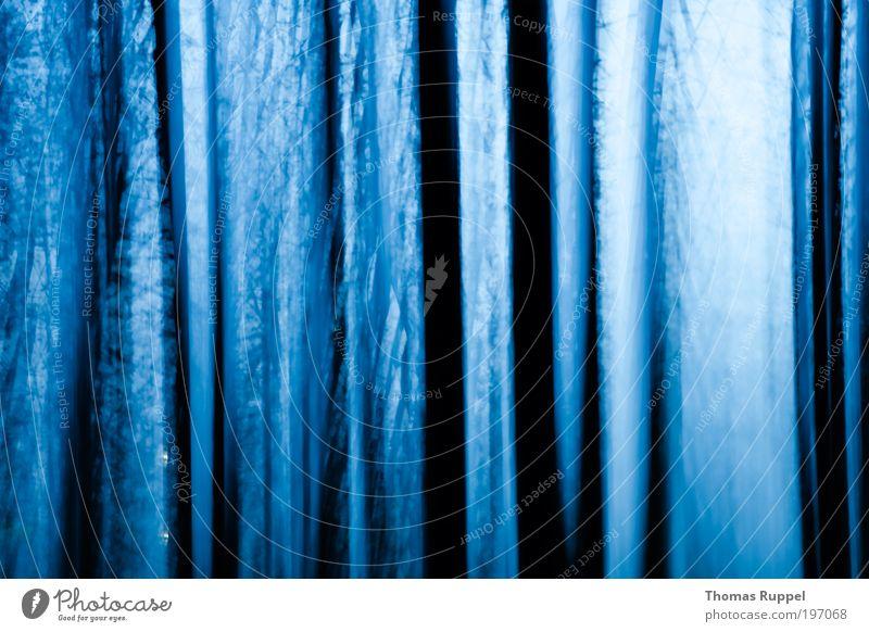 Natur - abstrakt mit Ästen Landschaft Himmel Nachthimmel Wetter Pflanze Baum Wald dunkel kalt blau schwarz Kraft Mut Farbfoto Außenaufnahme Menschenleer