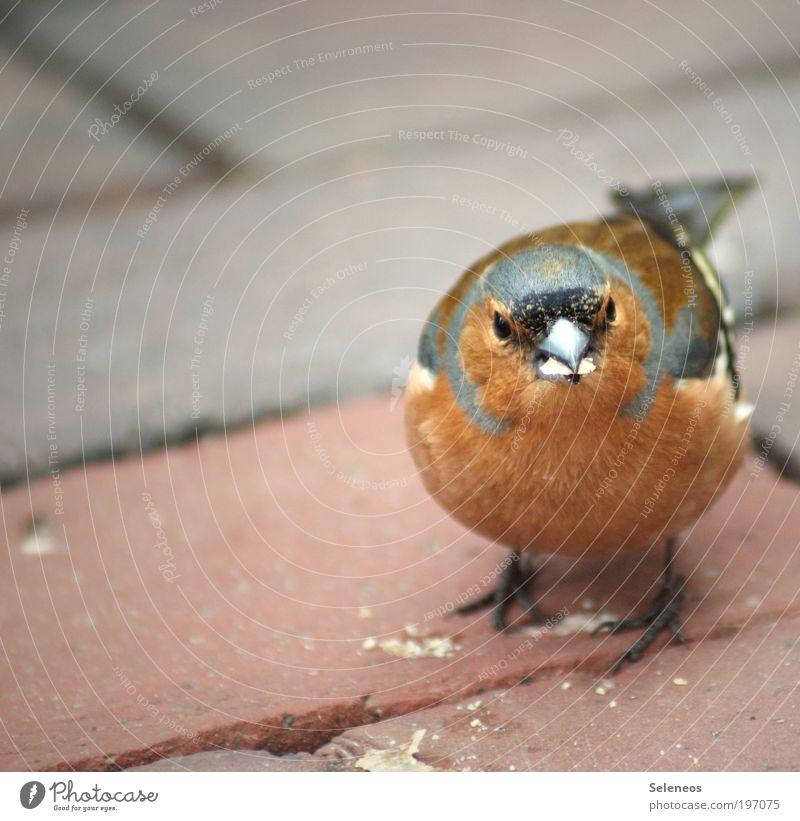 Krümelsammler Tier Vogel Tiergesicht füttern klein Neugier niedlich Schnabel Fressen Farbfoto Außenaufnahme Textfreiraum links Tag Tierporträt