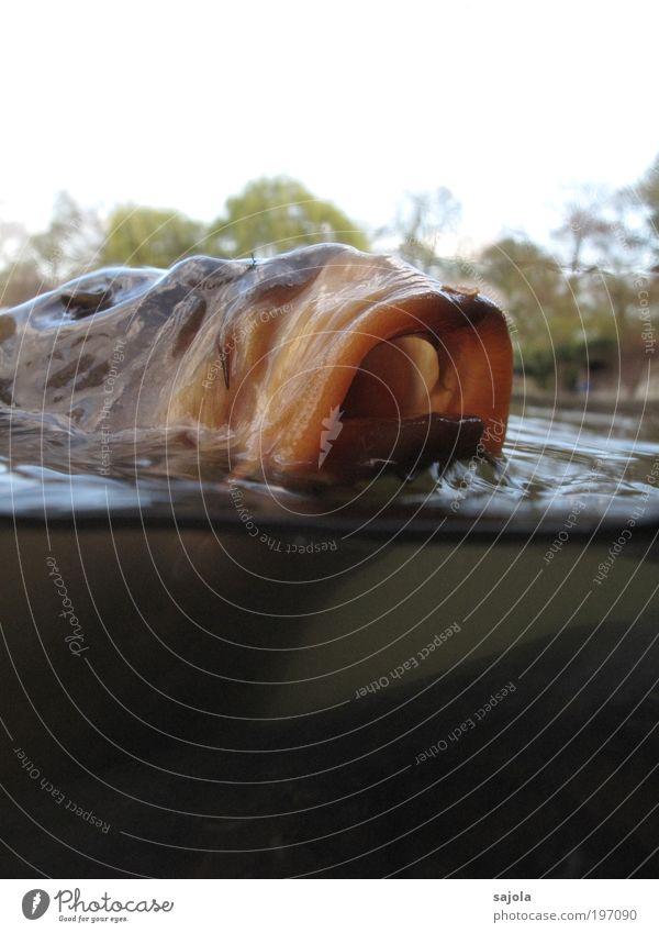 schlabbermaul [LUsertreffen 04|10] Natur Wasser Tier See Umwelt Unterwasseraufnahme Fisch offen Storch Appetit & Hunger Vogel Religion & Glaube Ekel Teich