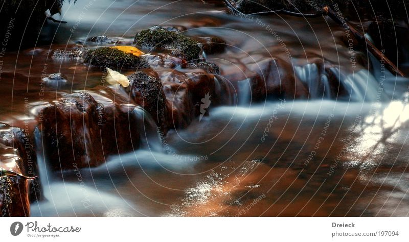 wet Lauf II Umwelt Natur Landschaft Urelemente Erde Wasser Wassertropfen Blatt Garten Park Wiese Urwald Felsen Flussufer Bach Wasserfall beobachten Bewegung