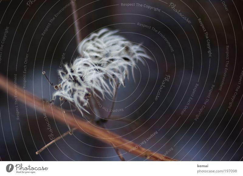 Puschelige Pflanze Natur weiß Winter schwarz kalt Umwelt Frühling Wachstum Sträucher Blühend kuschlig buschig Frühlingsgefühle Detailaufnahme Wildpflanze