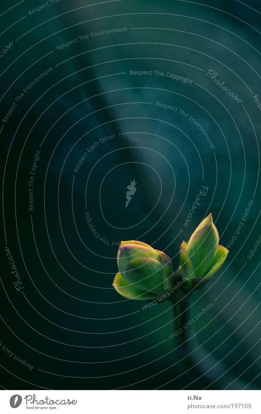 ich wachse noch Teil II Natur grün Pflanze Tier Leben Frühling Glück Landschaft Zufriedenheit Umwelt verrückt Fröhlichkeit Wachstum Sträucher Lebensfreude Kreativität
