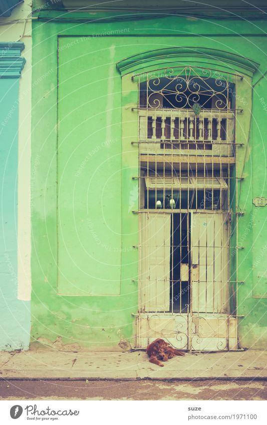 Nicht wecken - schlafender Hund Zufriedenheit ruhig Ferien & Urlaub & Reisen Städtereise Haus Leben Kultur Wärme Fassade Tür Wege & Pfade Haustier Armut dreckig