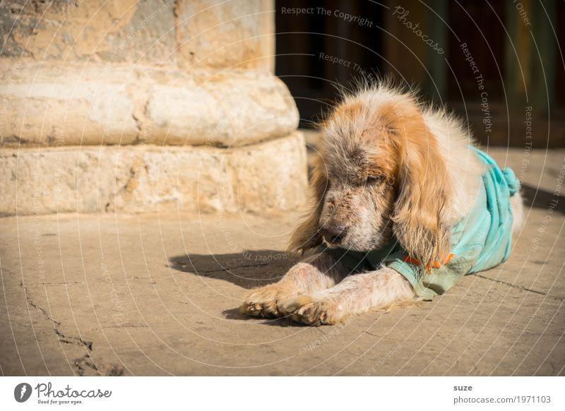 Siestaner Ferien & Urlaub & Reisen Hund alt Tier ruhig Leben Senior Wege & Pfade Zufriedenheit liegen dreckig Kultur Armut niedlich Vergänglichkeit