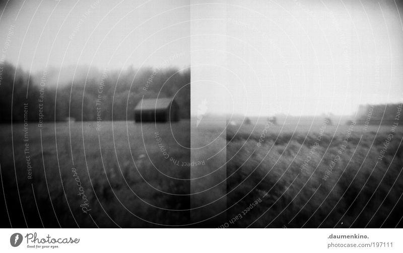 traumsequenz Natur weiß schwarz Landschaft dunkel Tod Gefühle träumen Stimmung Feld Angst natürlich laufen ästhetisch bedrohlich beobachten