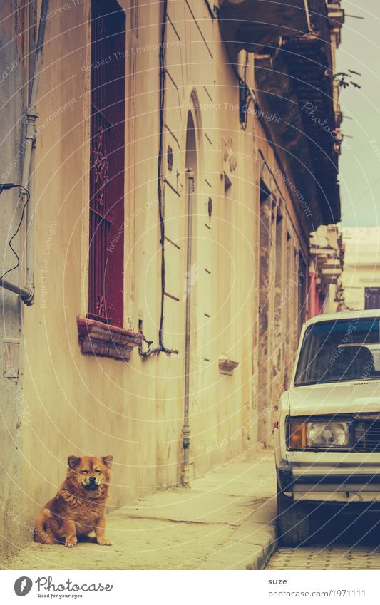 Dicke Luft Leben Zufriedenheit Ferien & Urlaub & Reisen Städtereise Haus Kultur Stadt Altstadt Fassade Straße PKW Oldtimer Haustier Hund Armut klein niedlich