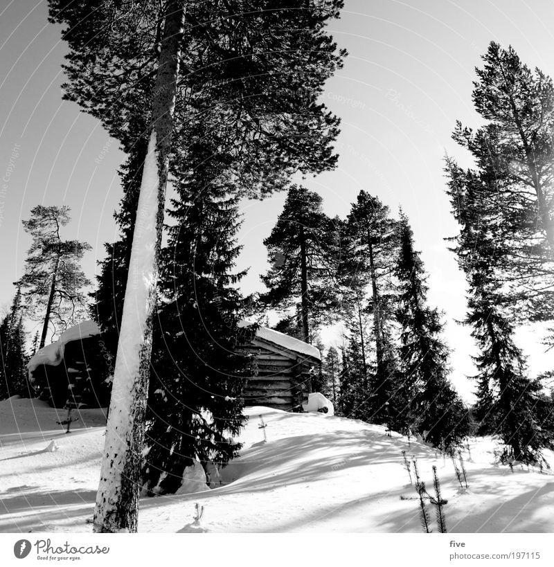 luosto VII Ferien & Urlaub & Reisen Tourismus Ausflug Ferne Freiheit Winter Winterurlaub wandern Natur Landschaft Himmel Schönes Wetter Eis Frost Schnee Pflanze