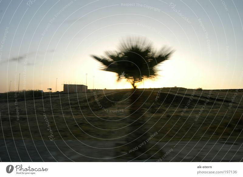 Reisestimmung Natur Landschaft Pflanze Sonnenaufgang Sonnenuntergang Sommer Schönes Wetter Baum Feld Hügel Dorf dunkel Ferne gigantisch groß trashig trist