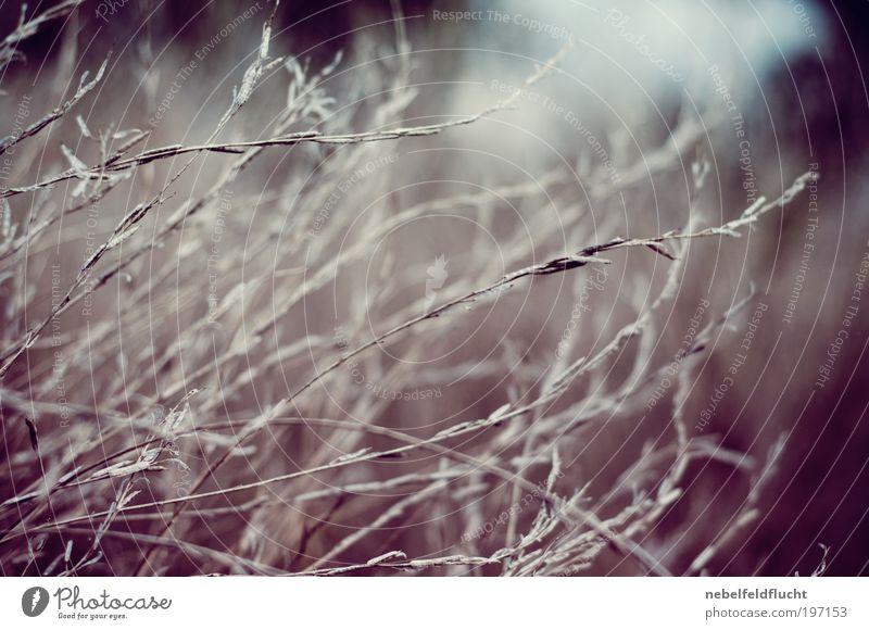 Trockengräser Natur Pflanze Winter Einsamkeit Wiese Gefühle Gras Frühling träumen Stimmung Feld Zeit ästhetisch retro trist Sträucher