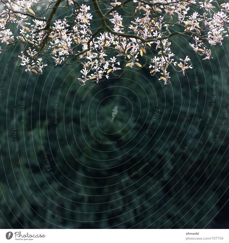 Frühling Natur Pflanze Baum Landschaft Blatt Umwelt Leben Blüte Glück Wachstum Lebensfreude Tanne Frühlingsgefühle Zweige u. Äste