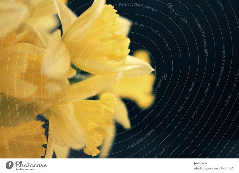 #197162 Lifestyle elegant Stil Wohnung Dekoration & Verzierung Feste & Feiern Muttertag Leben Pflanze Blume Blüte Blühend leuchten Kitsch positiv