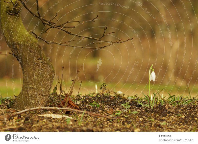 Ganz allein Umwelt Natur Landschaft Pflanze Urelemente Erde Frühling Schönes Wetter Baum Blume Blüte Garten Park natürlich Wärme braun grün weiß Frühblüher