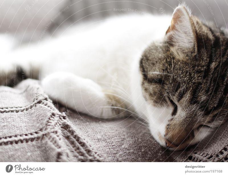 Ritual Katze schön ruhig Erholung Wärme träumen Zusammensein Wohnung wild schlafen weich Fell Schutz Vertrauen Sofa Müdigkeit