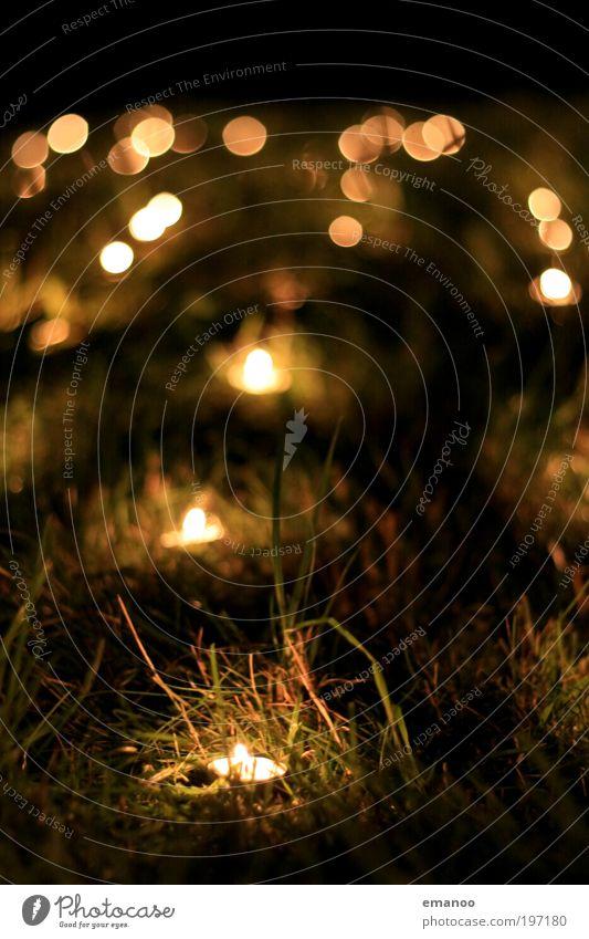 lichtermeer Natur Pflanze Garten Wiese Zeichen dunkel heiß gelb Traurigkeit Trauer Hoffnung Religion & Glaube Kerze Teelicht brennen Kerzenschein