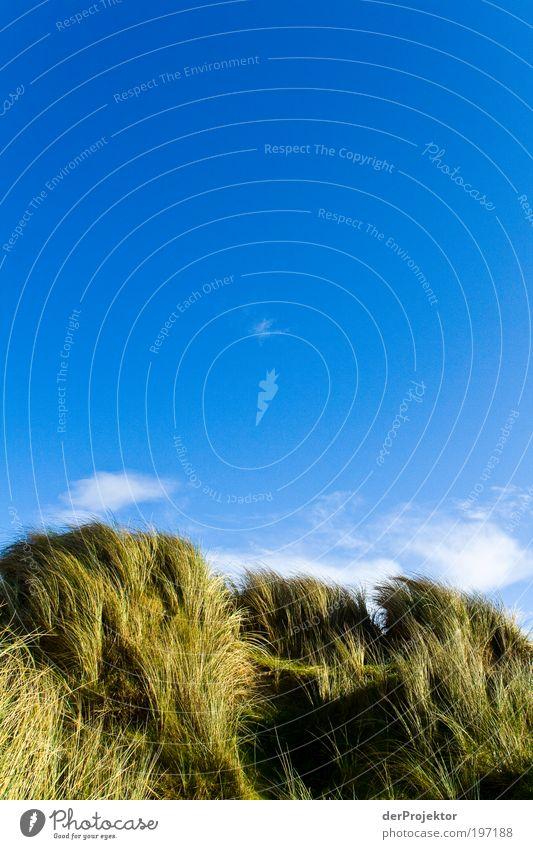 Hundefellrücken – rein optisch Natur Himmel Sonne blau Pflanze Strand Wolken gelb Ferne Gras Frühling Sand Landschaft braun Küste Wind