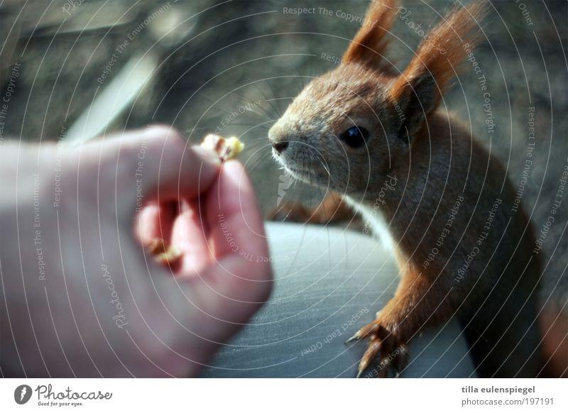 los! gib schon her! Natur Tier Park lustig klein Umwelt Freude Klettern wild natürlich außergewöhnlich Neugier Wildtier niedlich Appetit & Hunger