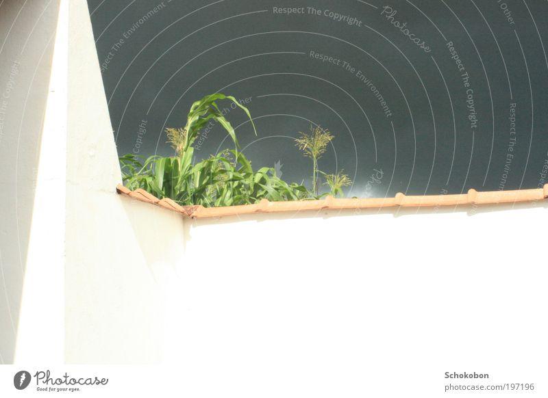 Ruhe vor dem Sturm Himmel Natur weiß grün schön Pflanze Sonne ruhig schwarz Ferne dunkel Wand Landschaft grau Mauer Stimmung