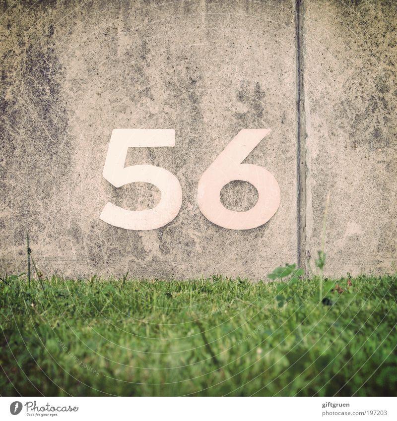 barium Pflanze Gras Wiese Mauer Wand grau grün 56 sechsundfünfzig Ziffern & Zahlen Ordnung ordentlich Barium Metall Periodensystem Reihenfolge Jubiläum Fuge
