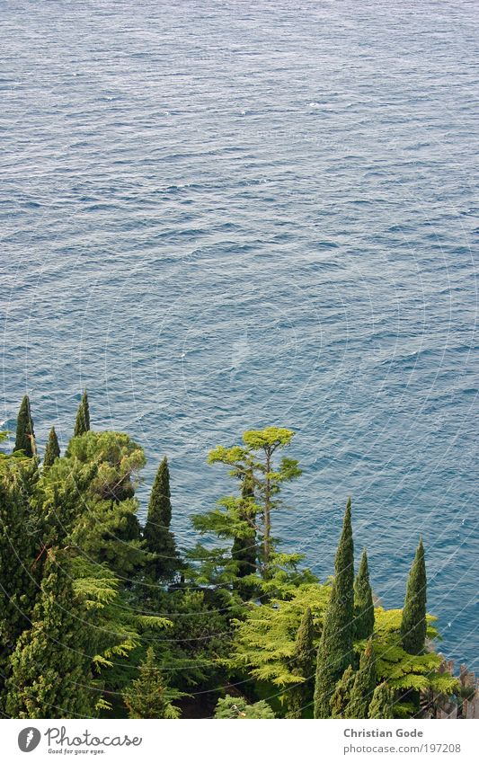 Zypressen und See Umwelt Natur Landschaft Pflanze Tier Wasser Wassertropfen Sommer Gras Sträucher Grünpflanze Park Hügel Felsen Berge u. Gebirge Teich blau grün