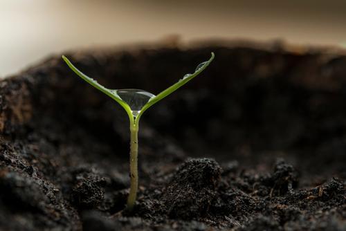 Gedeihen Natur Pflanze Wasser Wassertropfen Nutzpflanze Paprika Trieb Garten Blumentopf Anzuchttopf Wachstum Flüssigkeit glänzend klein braun grün Vorfreude