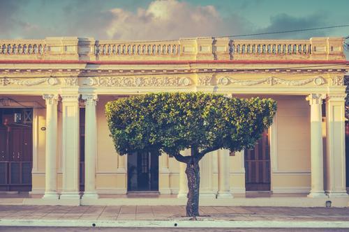 Klarer Schnitt Ferien & Urlaub & Reisen alt Stadt grün Baum Haus ruhig Fenster Wärme Kunst Zeit Fassade Kultur historisch Fußweg Altstadt