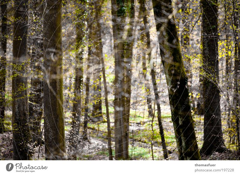 Waldfrühling Ausflug Natur Landschaft Frühling Schönes Wetter Baum Sträucher Park Fröhlichkeit hell Lebensfreude Frühlingsgefühle Romantik Erholung