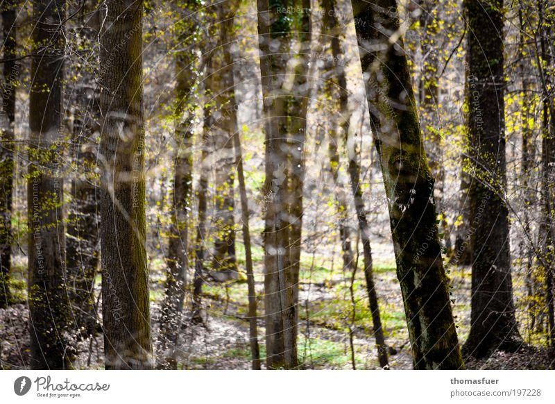 Waldfrühling Natur Baum Wald Erholung Frühling Park Landschaft hell Umwelt Ausflug Hoffnung Fröhlichkeit Romantik Sträucher Freizeit & Hobby Lebensfreude