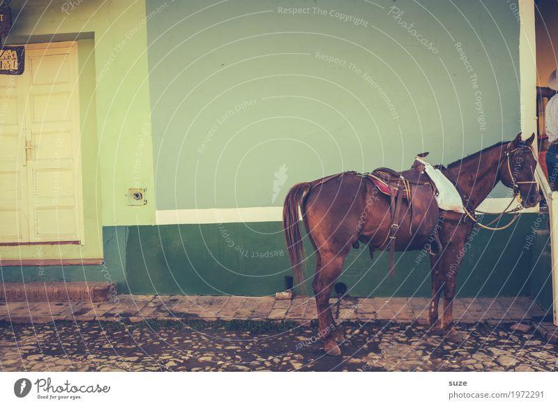 Keine zehn Pferde grün Haus ruhig Wege & Pfade braun Fassade Häusliches Leben Tür Kultur warten Armut Vergänglichkeit einfach Fußweg Vergangenheit