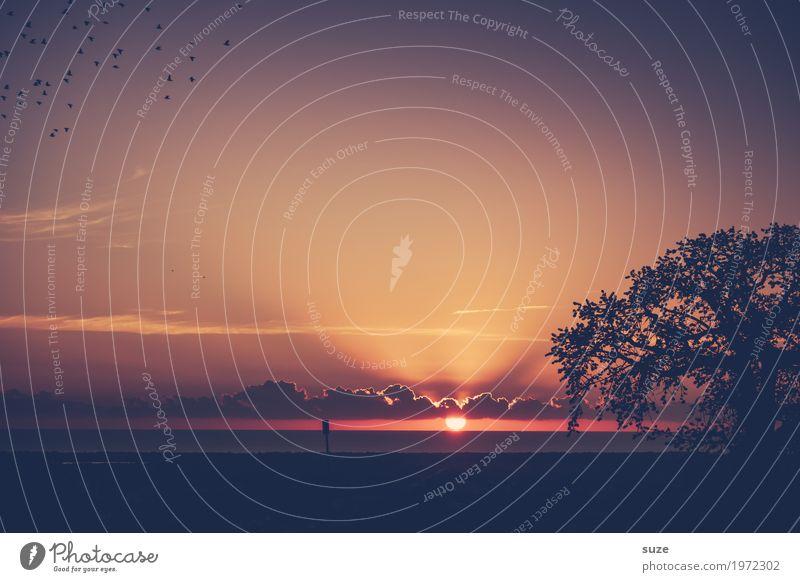 SonnNahmd Zufriedenheit Ferien & Urlaub & Reisen Umwelt Natur Landschaft Pflanze Urelemente Luft Himmel Wolken Horizont Sommer Schönes Wetter Wärme Baum Stadt