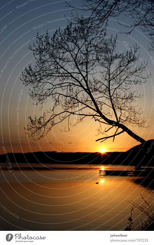 Sonne mit Baum Himmel Ferien & Urlaub & Reisen Sonne Sommer Strand ruhig Erholung Landschaft Freiheit Frühling Zufriedenheit Wildtier Ausflug Tourismus Feuer Schönes Wetter