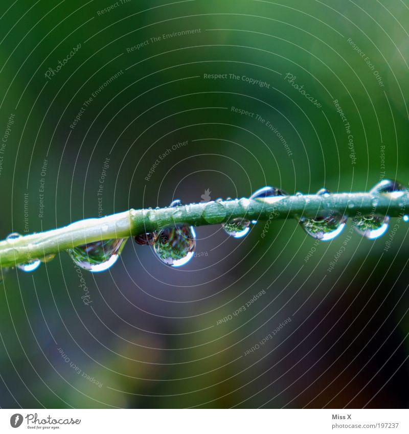 SUCHBILD Umwelt Wasser Wassertropfen Frühling Klima Wetter schlechtes Wetter Unwetter Regen Pflanze Gras Park Wiese frisch kalt nass Tau Farbfoto