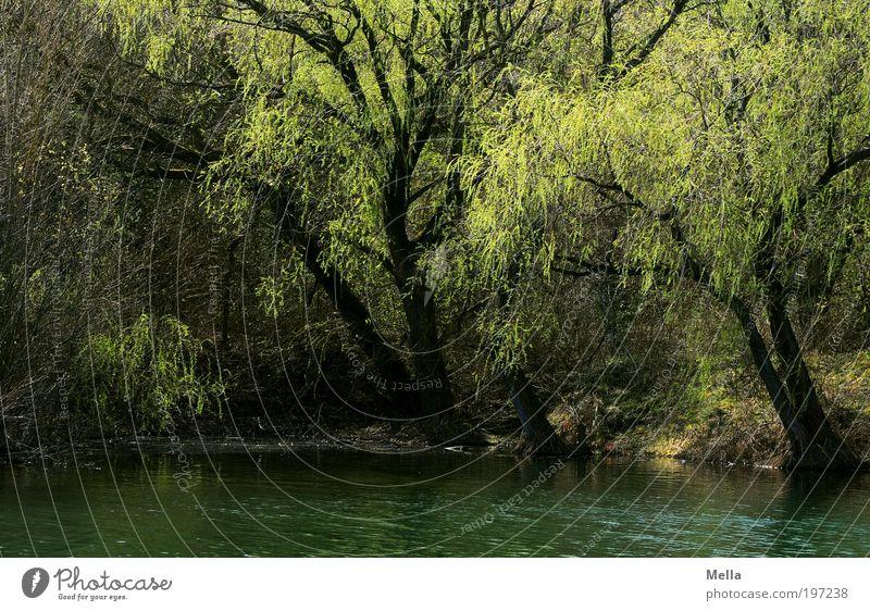 Lauschiges Plätzchen Natur Baum grün Pflanze ruhig Erholung Frühling See Park Landschaft Stimmung Umwelt Wachstum Pause Sehnsucht geheimnisvoll