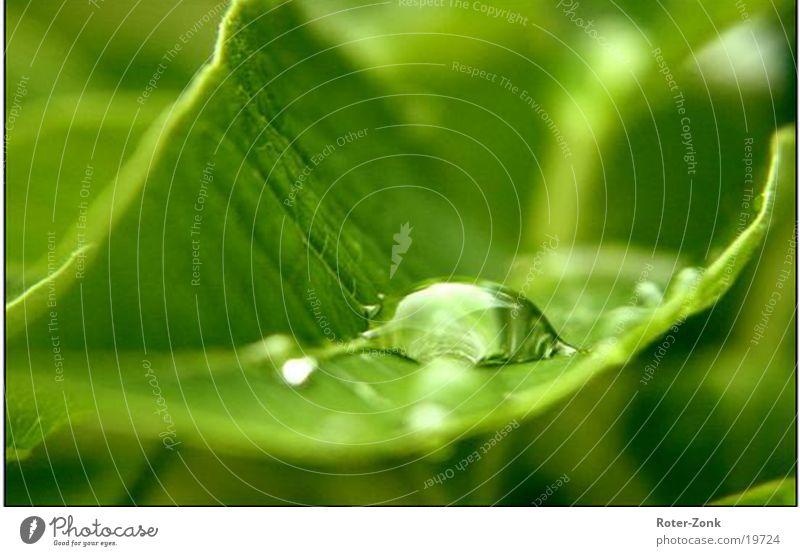 Der Tropfen Natur Regen