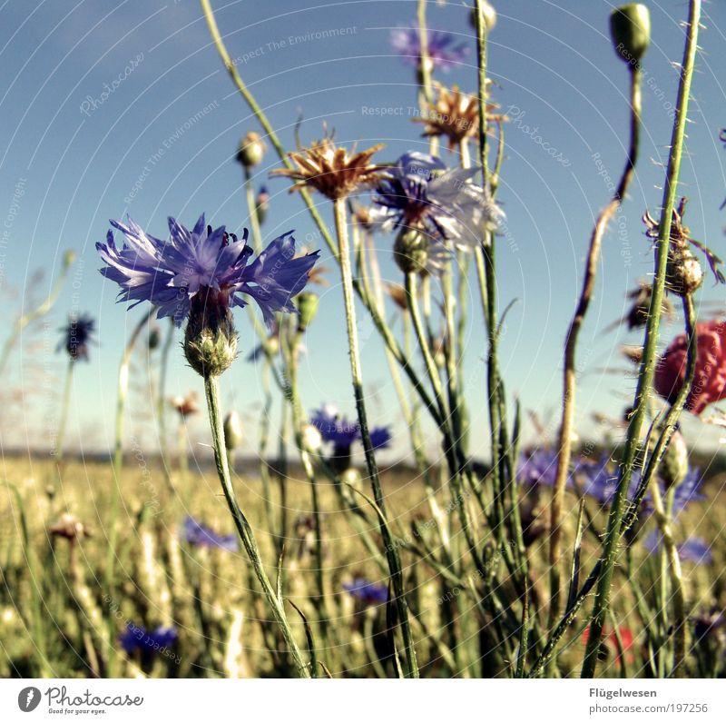 SOMMER Himmel Baum Pflanze Sonne Sommer Ferien & Urlaub & Reisen Blume Erholung Gras Feld Freizeit & Hobby Ausflug Kornfeld Sträucher Pause einzigartig