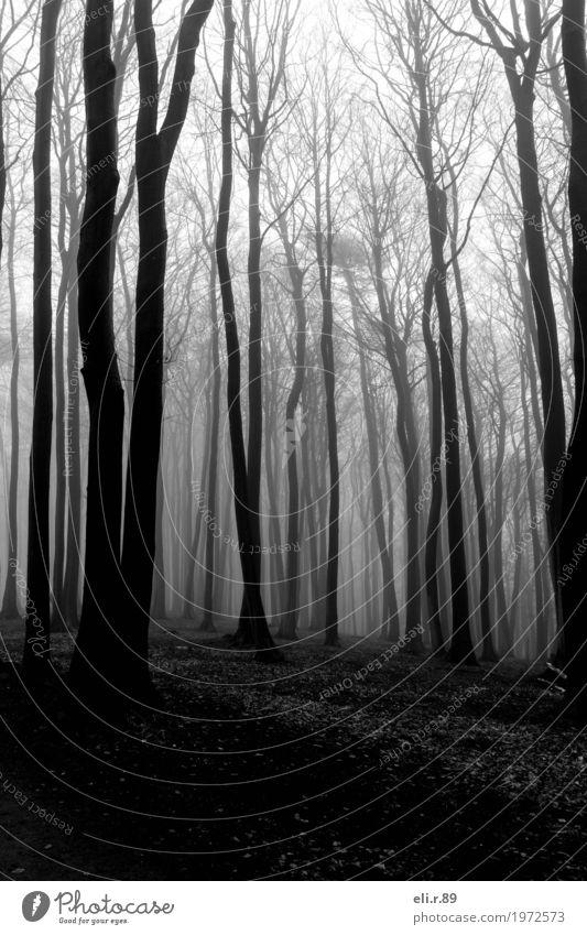 Nebelwald Ausflug Abenteuer Umwelt Natur Landschaft Pflanze Baum Wald Wege & Pfade Holz dunkel grau schwarz weiß Romantik ruhig Einsamkeit Stimmung