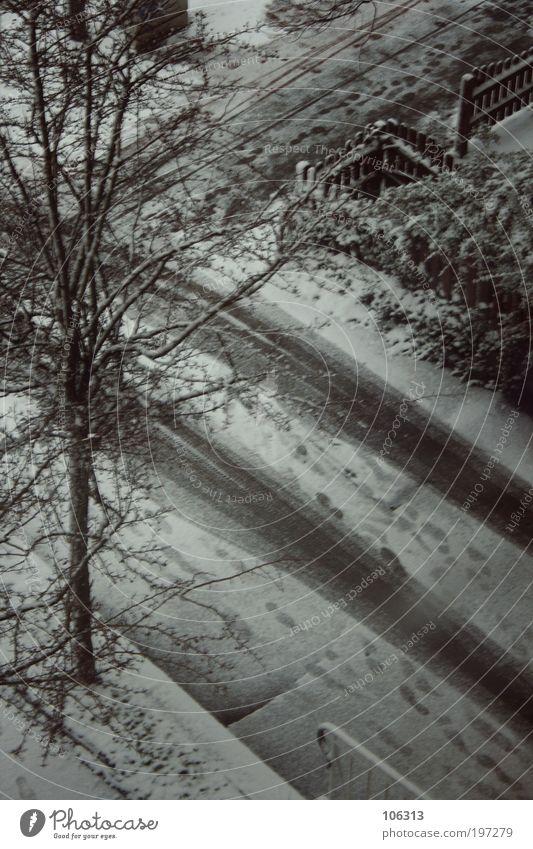 Fotonummer 153667 Natur Stadt Baum Pflanze Umwelt Landschaft Schnee Gefühle Schneefall Park Spuren Fußweg Einfahrt